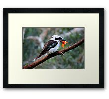 The Kookaburra Thief Framed Print