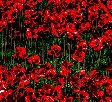 Poppy fields of remembrance for WW1 at Tower of London by Luke Farmer