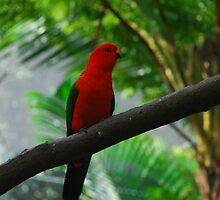 Tropical Bird by macleaney