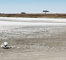 Death, & Dead Lake, Tanzania  by Carole-Anne