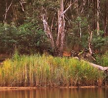 Reeds at Cobram By Lorraine McCarthy by Lozzar Landscape