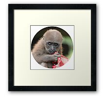 Orphaned Baby Monkey - and her Red Blanky Framed Print