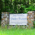 Duke Forest Sign by Cynthia48