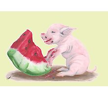 Pig Eating Watermelon Photographic Print