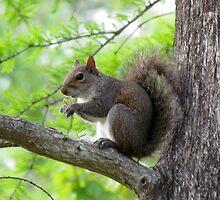 Squirrel Sitting Very Still by Cynthia48