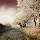 Down Winter Road by © Kira Bodensted