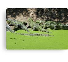 Gator Gathering Canvas Print