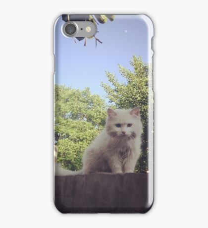 Cute Cats on a Ledge in Nature iPhone Case/Skin