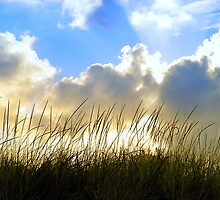 Seaside Grass and Clouds by Sharon Woerner