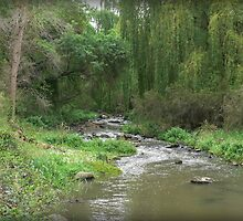 Willow Green on the Merri by Larry Lingard-Davis