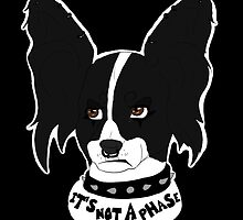 It's Not A Phase - Outsider Papillon by ToddBremer