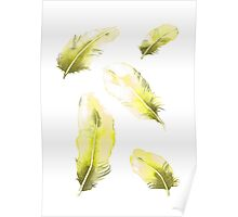 Citrus Feathers Poster