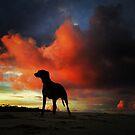 CASUARINA BEACH - Catch The Moment by Michael Kienhuis