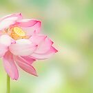 Blowin in the wind - lotus flower by Jenny Dean