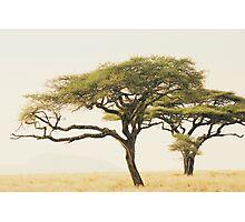 Spot the leopard Photographic Print