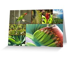 Collage from Portugal (Madeira) 4 - Travel Photography Greeting Card
