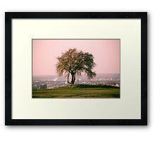 The lonely tree on a hill. The view over the city. Pink sky. Nature Framed Print