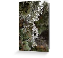 Mother Nature's Christmas Decorations - Cypress Branches Greeting Card