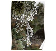 Mother Nature's Christmas Decorations - Cypress Branches Poster