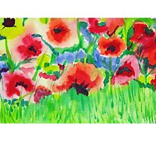 Poppy Field 2 Photographic Print