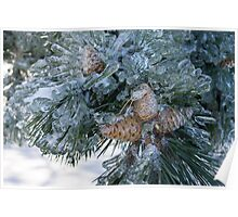 Mother Nature's Christmas Decorations - Pine Cones Poster
