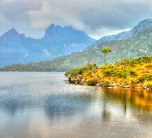 Lone Tree Cradle Mountain by Michael Matthews