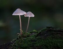 fragile twins by hanspeters
