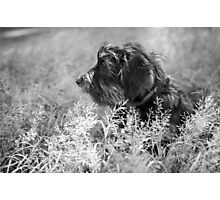Pensive pooch Photographic Print