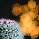 Bokeh with prickles by Mick Kupresanin