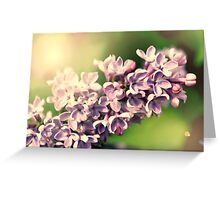 Flowers background. Pink lilac flowers Greeting Card