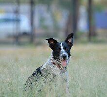 Grassy pooch by Nic MacBean