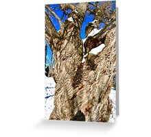 Old Willow Tree, Stanley Ave. Park, Ottawa, ON Canada Greeting Card