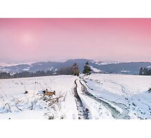 The sunset in the mountains during the winter. Coniferous forest in the background. Pathway through the field Photographic Print