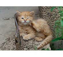 Red Tabby Kitten Feels Itchy Photographic Print