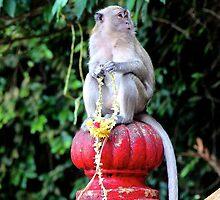 Friendly Monkey II - Batu Caves, Malaysia. by Tiffany Lenoir