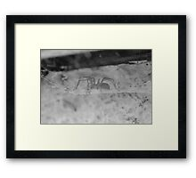 Black and White Spider Framed Print