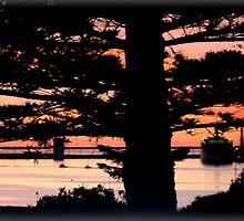 Early morning behind a Norfolk Pine by Chris Chalk