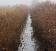 Foggy Drain by Ecohippy