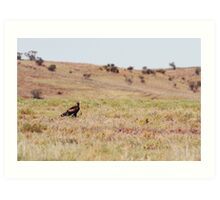 Wedge-Tailed Eagle (Aquila audax) Art Print