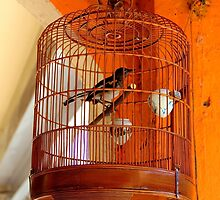 A Bird in cage - Kuala Lumpur, Malaysia. by Tiffany Lenoir
