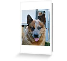 ACD red merle Greeting Card
