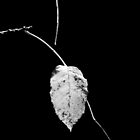 one leaf left by Laurie Minor