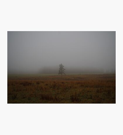 Tree in the fog Photographic Print