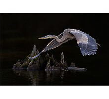 After meal flight... Photographic Print