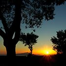 Sunset behind the trees ~ 1 by Rachel Veser