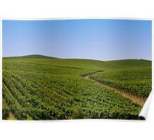 Vineyards Poster