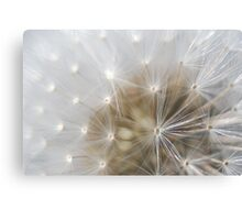 Just Dandy Canvas Print