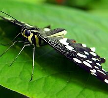 Butterfly Eyes by Amy McDaniel