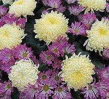 Chrysanthemums by Alexandra Lavizzari