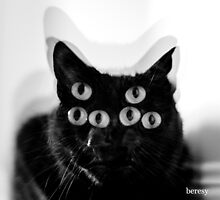 Black Cat Print by beresy